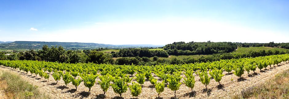 54db723605e7c-les-vins-bio-ou-l-expression-du-terroir