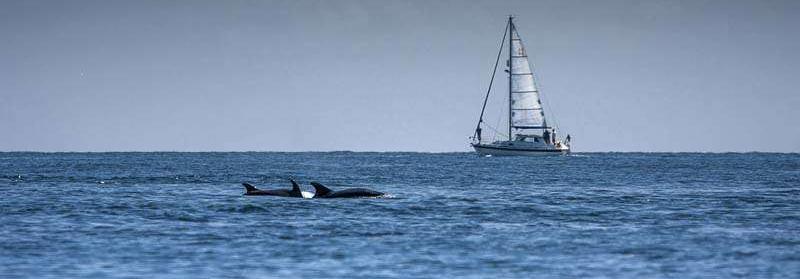photographiez-les-cetaces-a-bord-d-un-voilier-en-mediterranee