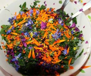 De belles assiettes colorées et fleuries à base de plantes sauvages comestibles